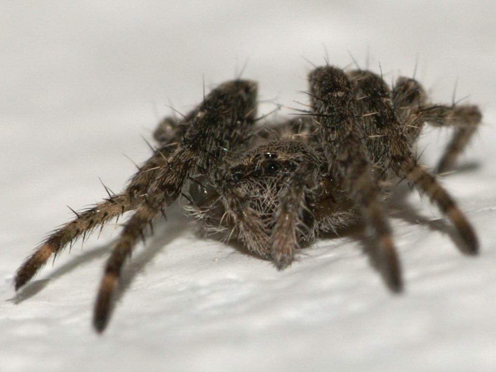 sonyuserforum spinnenaugen mein erstes insekten makro seite 2. Black Bedroom Furniture Sets. Home Design Ideas